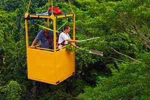 Daintree Rainforest Observatory researchers